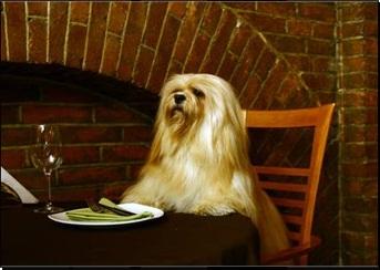 lhasa apso restaurante