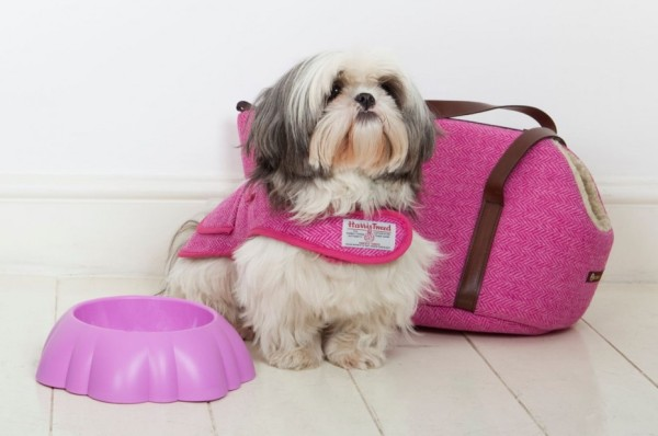 Shih-Tzu-Travel